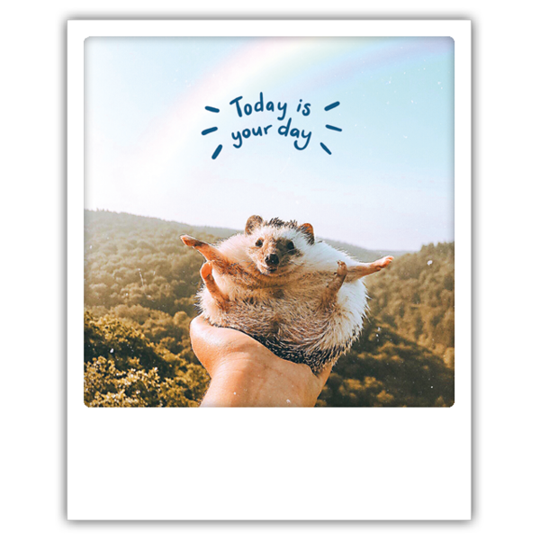 Pickmotion - today is your day hedgehog